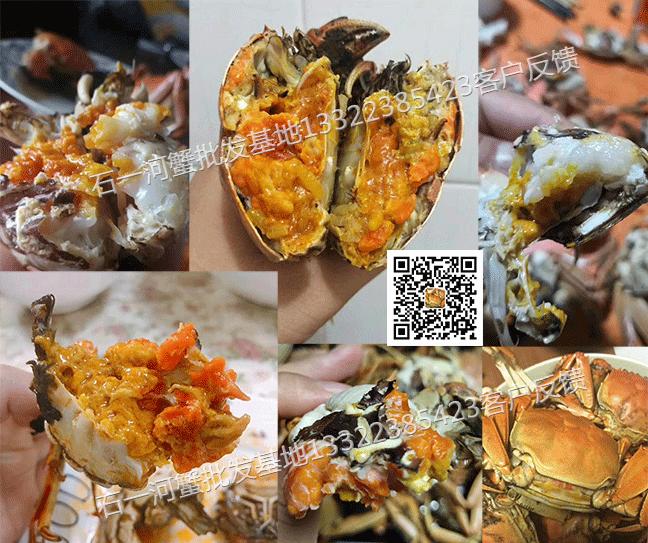盘锦2两母河蟹最肥时候的图片