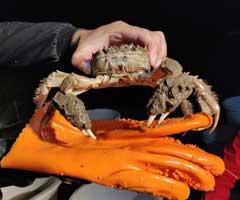 河蟹实拍图片